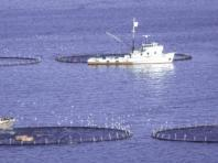 The project would consist of 80 circular tuna cages, each 50 meters in diameter